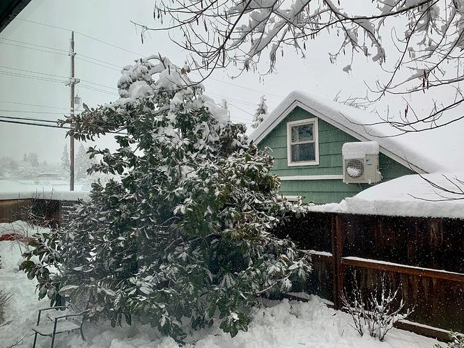 snowstorm-backyard